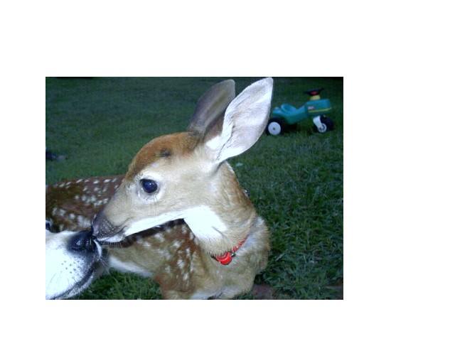 Anyone in Northeast Georgia?-deerpictures-048.jpg