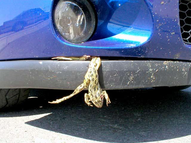 Recent Wyoming Trip Pics-frog-1sm.jpg