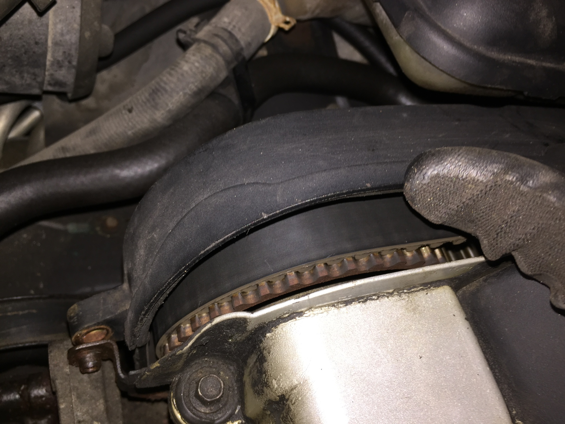 Timing Belt condition - advice needed-img_8398.jpg